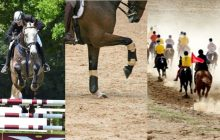 importance-alimentation-cso-dressage-endurance-220x140 Importance de l'alimentation