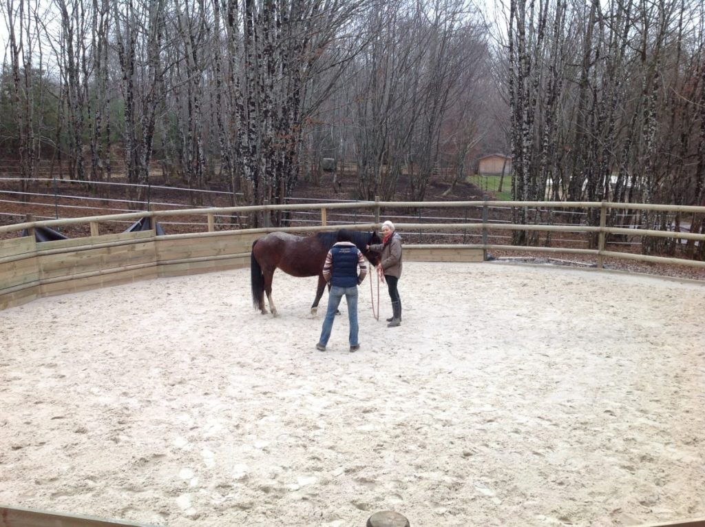 photo-e1467194261446 Apprentissage chez le cheval